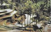 cocotiers dominant les rizières, Bali-Bezakih, photo Suzanne Held
