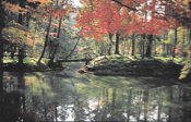 jardin de mousses, Kyoto-Kokedera, photo Suzanne Held